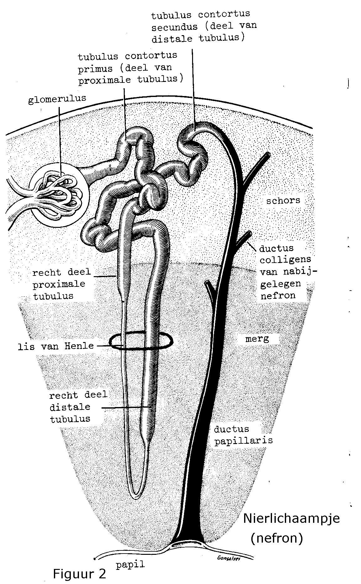 Filtersysteem nier
