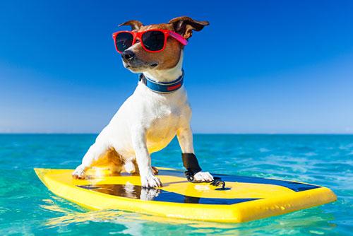 Hond vakantie 2
