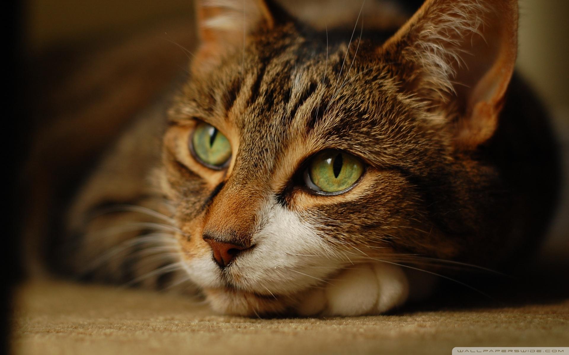 cat dreaming wallpaper 1920x1200