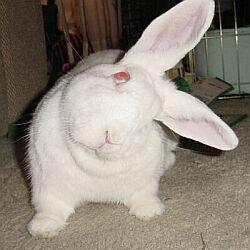 headtilt konijn